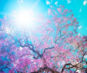 background, pink, and sun image