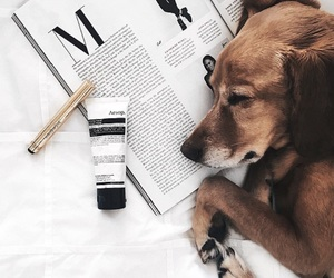 animals, dog, and read image