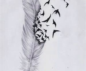 bird, feather, and drawing image