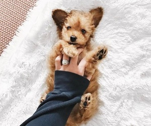 puppies, puppy, and dogie image