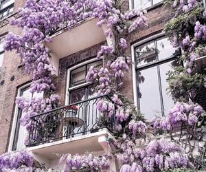flowers, purple, and beauty image