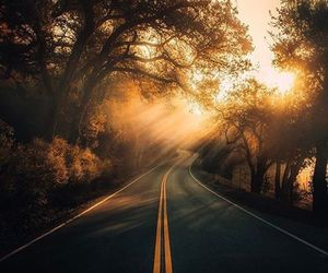 nature, road, and fall image