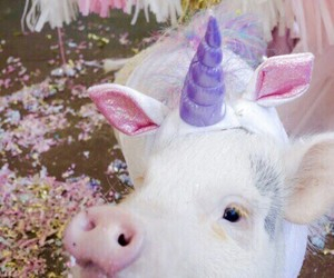 unicorn, pig, and cute image
