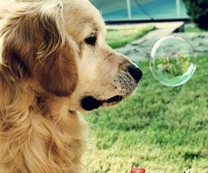 bubble, dog, and lovely image