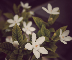 floral, flowers, and photography image
