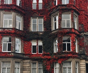 red, house, and flowers image