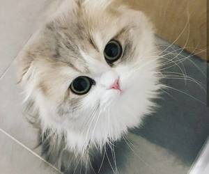 adorable, kitten, and cute image