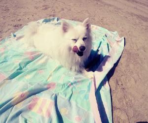 dog, eskimo, and pet image