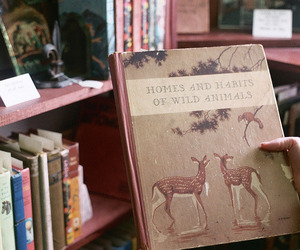 book, vintage, and animal image