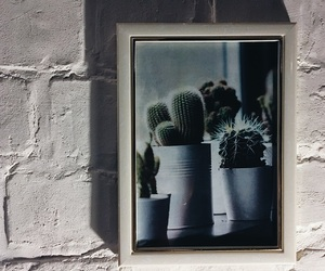 cactus, frame, and room image