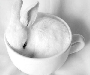 aesthetic, bunny, and white image