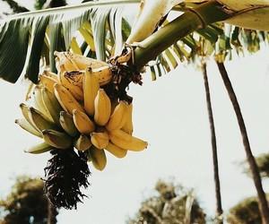 banana, tropical, and food image