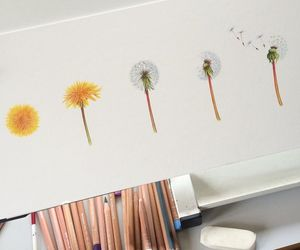 art, colored pencils, and dandelion image