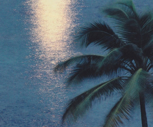 summer, palm trees, and ocean image