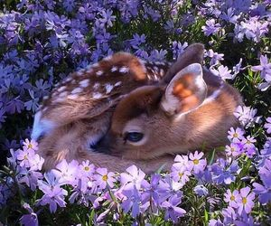 fawn and flowers image