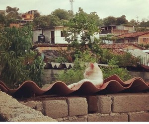 cat, love, and cloud image