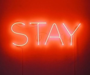 stay, neon, and light image
