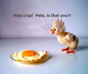Chicken and fun image