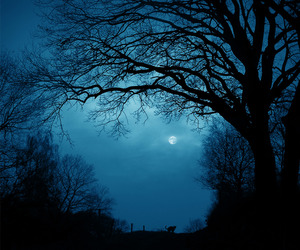 night, moon, and tree image