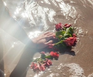 aesthetic, roses, and water image