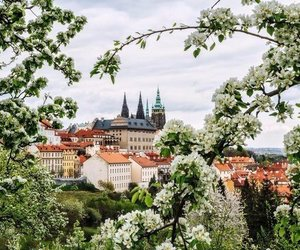 spring, flowers, and prague image