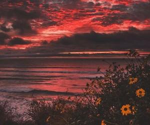 amazing, beach, and field image