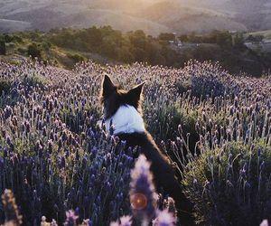 dog, animal, and beautiful image