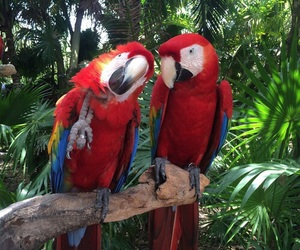 animal, parrot, and nature image