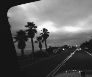 black and white, road, and palms image