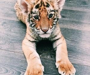 beautiful, beauty, and cute image