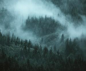 adventure, cozy, and fog image