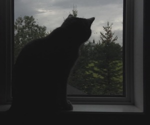 aesthetic, cat, and gloom image