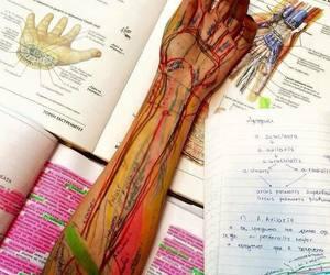 medicine, anatomy, and biology image