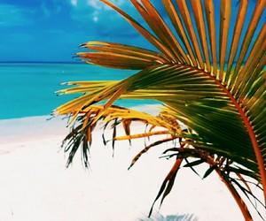 ocean, palm, and puntacana image