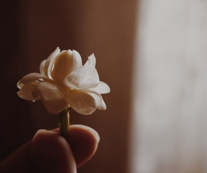 flower, small, and تصويري image