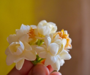 flower, small, and tumblr image