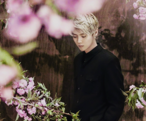 boy, sakura, and lu han image