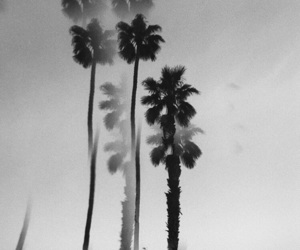 black n white and palm trees image