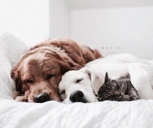 dog, animal, and cat image