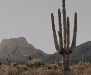cactus, desert, and lockscreens image
