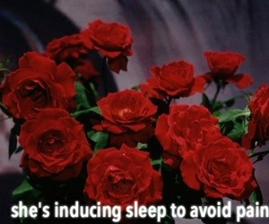 roses, grunge, and quotes image