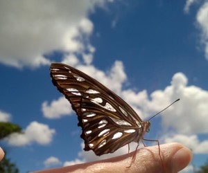 butterfly, clouds, and insect image