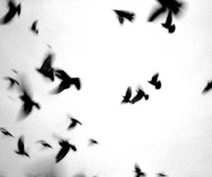 sky, birds, and black image