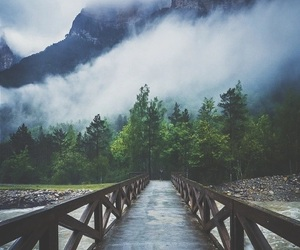 nature, forest, and bridge image