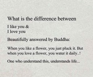 quotes, Buddha, and flowers image