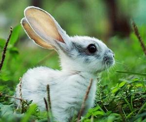 animals and rabbit image
