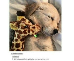 adore, puppy, and cute image