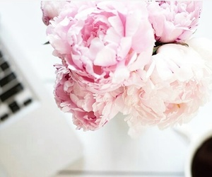carnation, coffee, and flower image