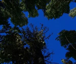 paz paisaje love Árboles image