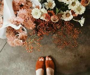 flowers orange peach image